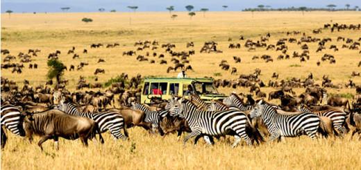 Migration Olakira Lamai safari traveller.